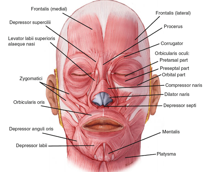 Can you build your facial muscles
